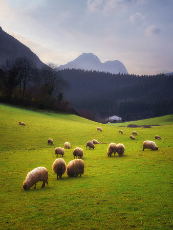 rural landscape with sheep grazing in Basque Country