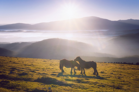 two horses in the mountain caressing