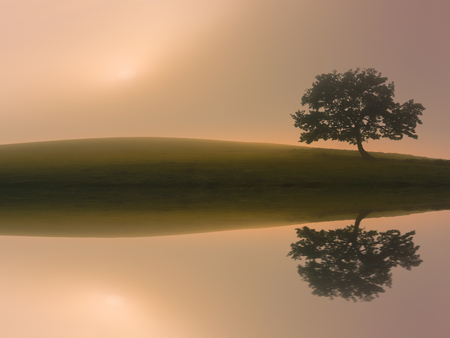 dreamy lonely tree with a lake reflection