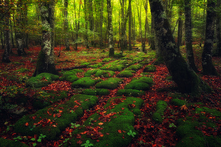 Natural paving stones in the forest