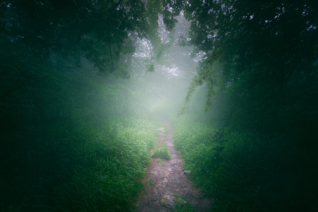 Path in the foggy forest at morning Banco de Imagens - 98368722