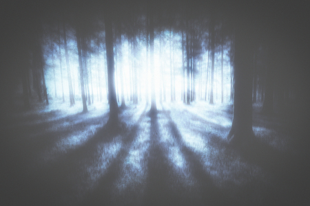 mysterious moody forest
