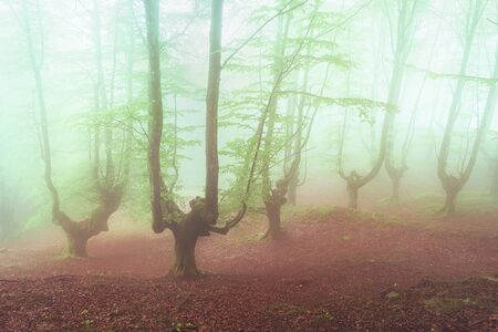 fantasy bright forest with fog Stock fotó