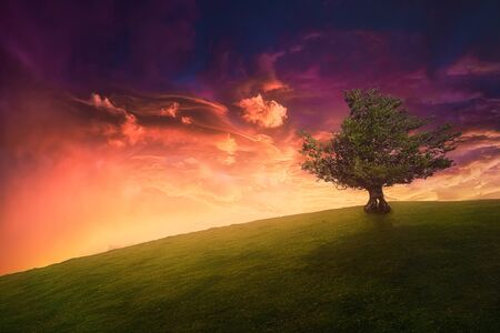 landscape background of lonely tree on hill with beautiful sunset sky