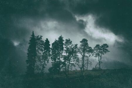 moody dark landscape of trees with grungy textures