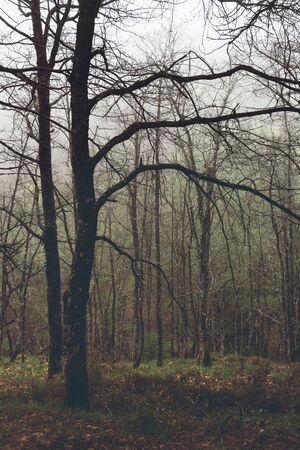 vintage forest with branches