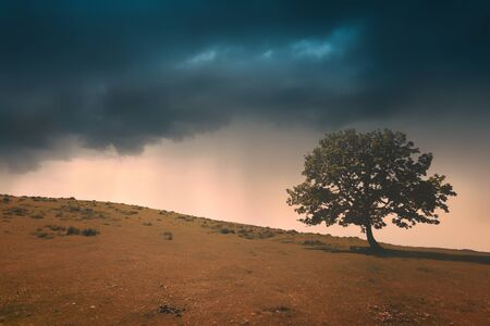 lonely tree against a dramatic sunset sky 免版税图像