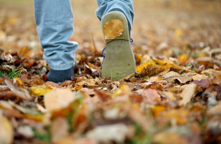 Close up male shoes walking on fall leaves outdoors photo