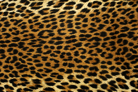 Close up spots pattern of a leopard