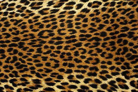 Close-up vlekken patroon van een luipaard Stockfoto