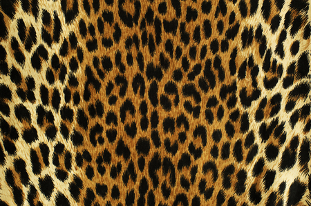 Close up black spots of a leopard