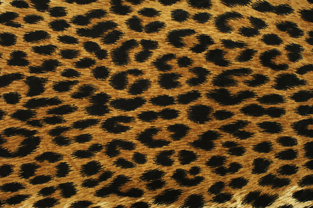 Close up black leopard spots texture design Stock Photo