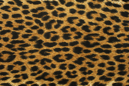 leopard: Close up leopard spot pattern texture background Stock Photo