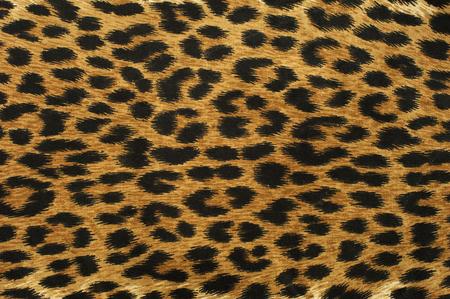 Close up leopard spot pattern texture background Stockfoto