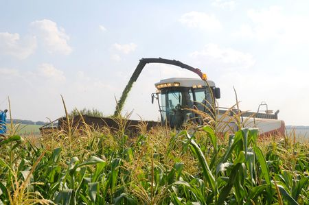 harvester reaps a crop of corn photo