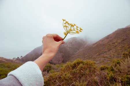 Beautiful female's hand holds a torn flower on a background of cloudy gray cloudy background on nature Foto de archivo