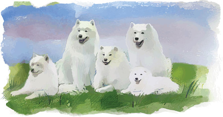 dog sled: Watercolor dog husky, samoyed, vector, hand drawn Illustration