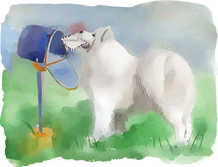 pampered: Watercolor dog husky, samoyed, vector, hand drawn Illustration