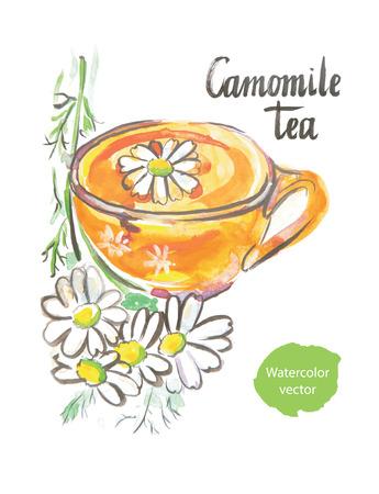 camomile tea: Camomile tea, watercolor, hand drawn, vector