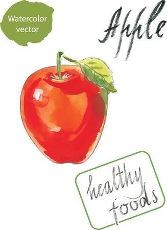 healthy foods: Watercolor apple hand drawn healthy foods
