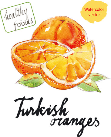 Watercolor hand drawn oranges - vector Illustration 矢量图像