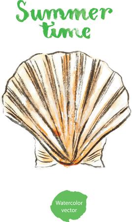 cockleshell: Watercolor hand drawn shell - vector Illustration Stock Photo