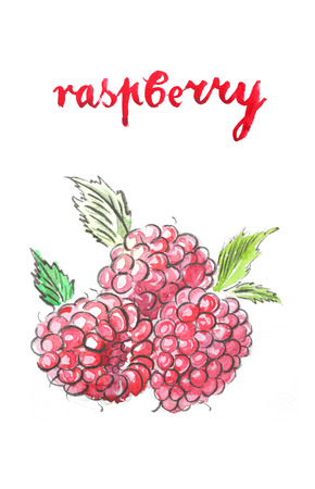 Watercolor hand drawn raspberry - Illustration