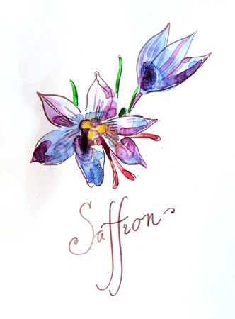 saffron: Watercolor hand drawn saffron - Illustration