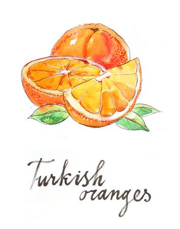 turkish dessert: Watercolor hand drawn oranges - Illustration