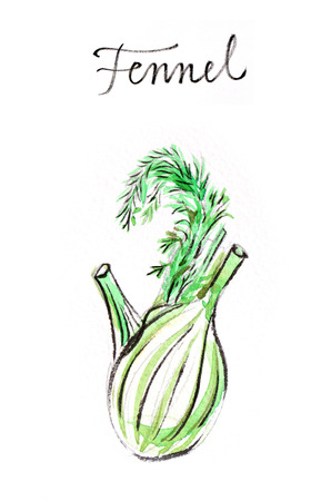 potherb: Watercolor hand drawn fresh fennel - Illustration