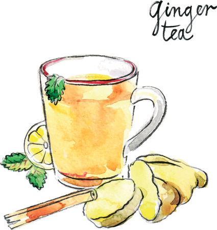 anise: Watercolor hand drawn helpful ginger tea - vector Illustration