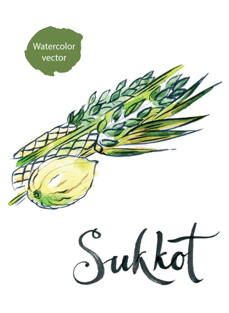 etrog: Watercolor lulav and etrog, Sukkot plants, Jewish holiday, hand drawn - vector Illustration Stock Photo