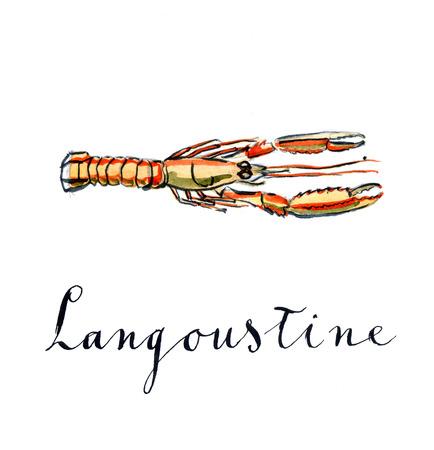 Orange langoustine, watercolor, hand drawn - Illustration Stock Photo