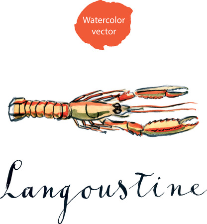 Orange langoustine, watercolor, hand drawn - vector Illustration
