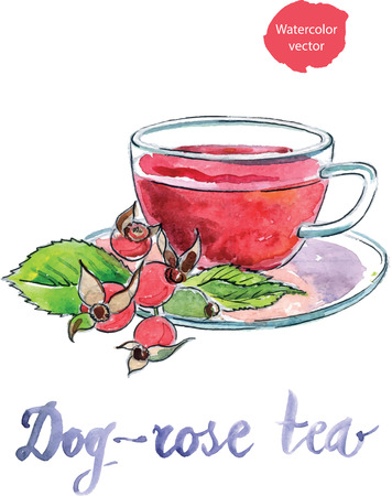 Cup of briar tea with berries, watercolor - vector Illustration