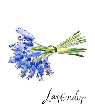 smelling: Bouquet of lavender, hand drawn, watercolor - Illustration