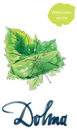 middle eastern food: Yaprak dolma, turkish cuisine, stuffed grape leaves, hand drawn, watercolor - vector Illustration
