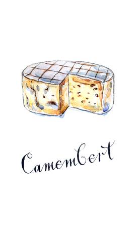 goat cheese: Camembert cheese, hand drawn, watercolor - Illustration