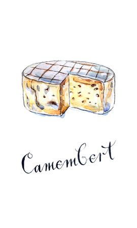 gouda: Camembert cheese, hand drawn, watercolor - Illustration