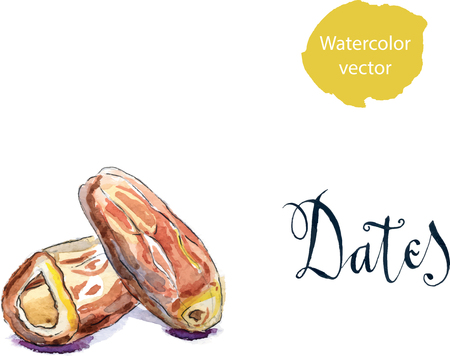 Delicious dried date fruit, hand drawn, watercolor - vector Illustration