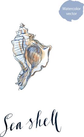 cockleshell: Sea shell, hand drawn, watercolor - vector Illustration