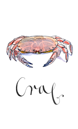 crab legs: Steamed mud crab, watercolor, hand drawn - Illustration