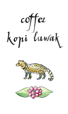 expensive: Asian Palm Civet - luwak, The animal used for the production of expensive coffee Kopi Luwak, watercolor, hand drawn - Illustration Stock Photo