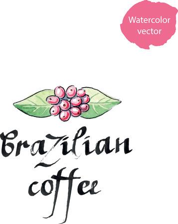 planta de cafe: planta del caf�, caf� �rabe, hojas y bayas, acuarela, dise�ada a mano
