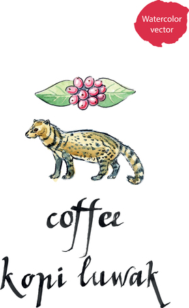 Asian Palm Civet - luwak, The animal used for the production of expensive coffee Kopi Luwak, watercolor, hand drawn Vetores