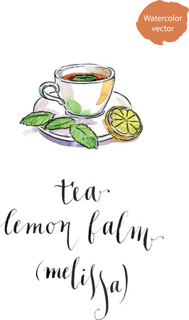 balm: Cup of tea with lemon and lemon balm, Healing herbal tea, watercolor, hand drawn Illustration