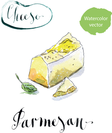 parmesan: Pieces of delicious Gourmet Organic Parmesan Cheese with basil, watercolor, hand drawn Illustration