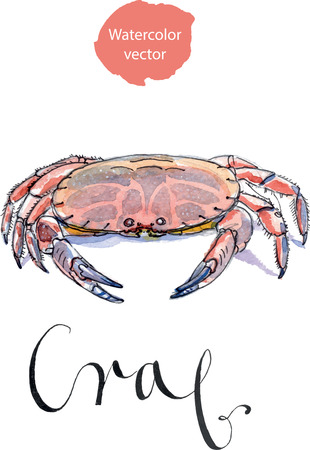 pincers: Steamed mud crab, watercolor, hand drawn Stock Photo