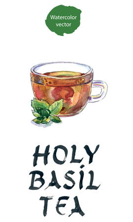 tulasi: Holy Basil Tulsi Tea Ayurvedic Remedy, Indian tea, watercolor, hand drawn - vector Illustration