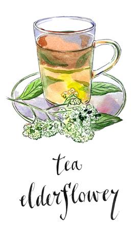 umbel: Elderflower (Sambucus nigra) tea in glass mug with elderflower blossoms, hand drawn - watercolor Illustration